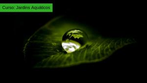 Cursos de Paisagismo em São Paulo / Curso de Jardins Aquáticos
